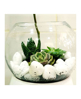Picture of Terrarium T1